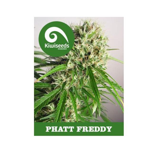 Phat Freddy Feminized