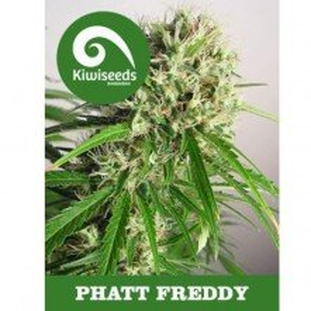 Phat Freddy Feminizada