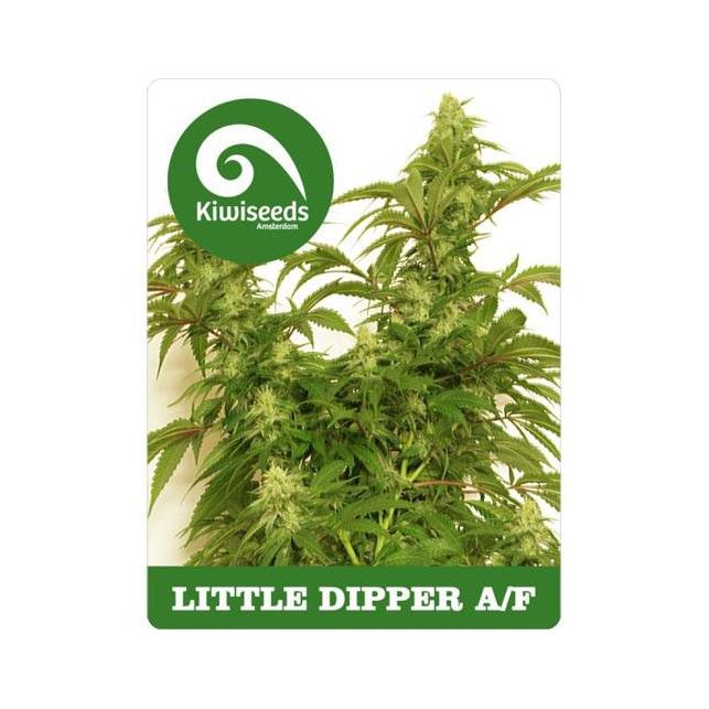 Little Dipper