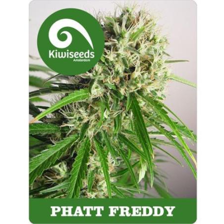 Phat Freddy