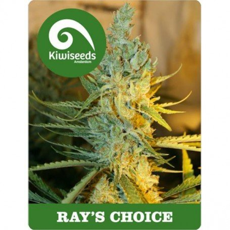 Ray's Choice Kiwi Seeds Regular