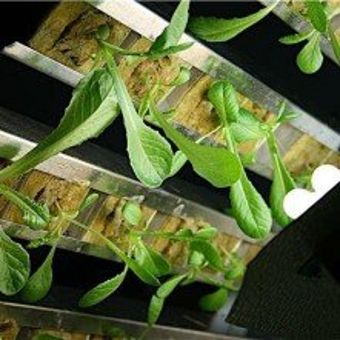 Gi Grow 144 Noria Cultivo Marihuana