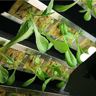 Gi Grow 240 Noria Cultivo Marihuana