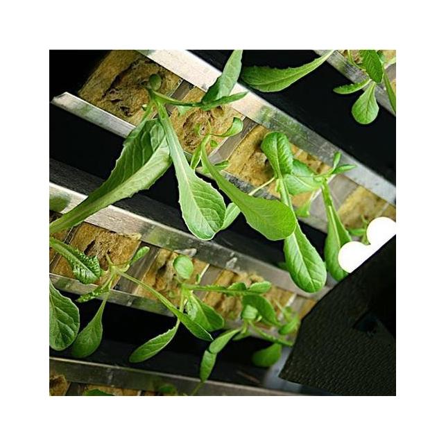 Gi Grow 336 Noria Cultivo Marihuana