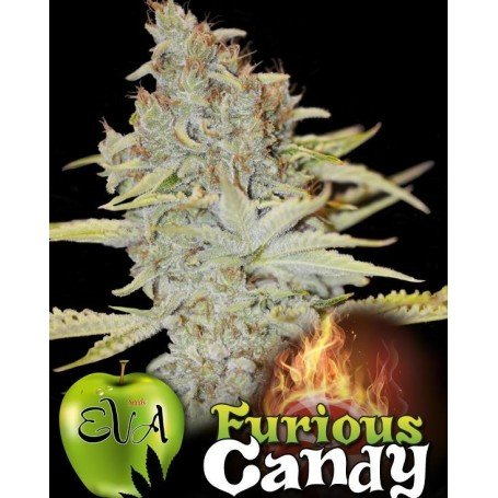 Furious Candy