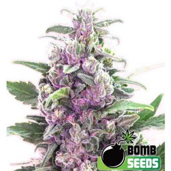 THC Bomb regular