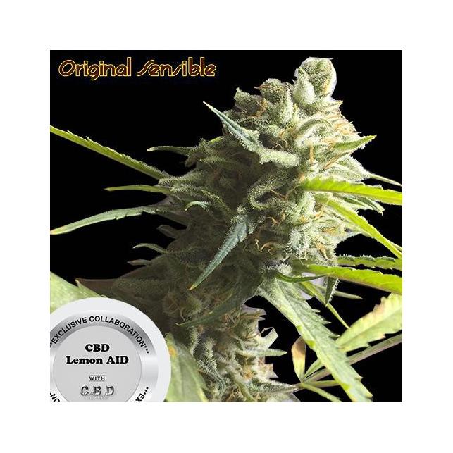 CBD Lemon Aid