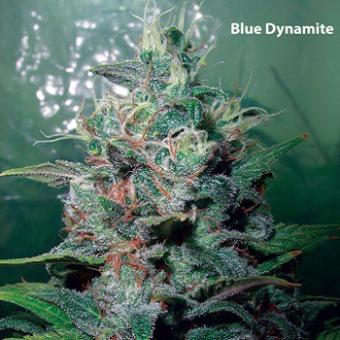 Blue Dynamite
