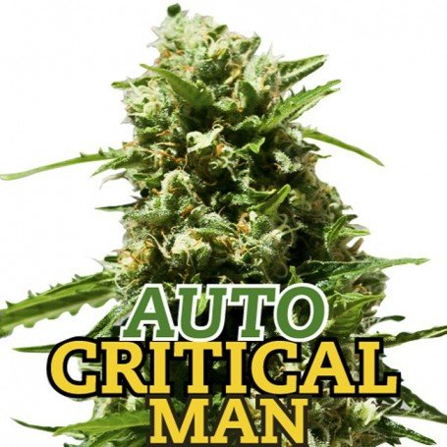 Auto Critical Man