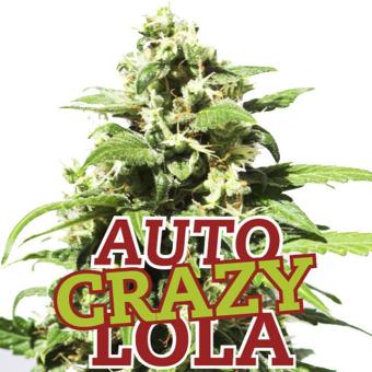 Auto Crazy Lola