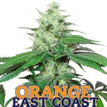 Orange East Coast
