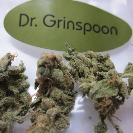 Dr.Grinspoon 2