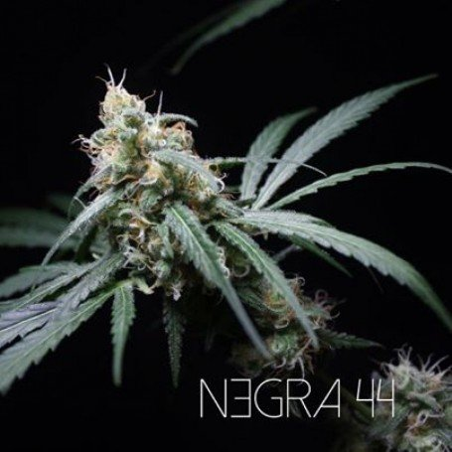 Negra 44 1