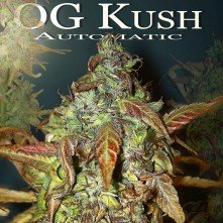 OG Kush Auto Humboldt Seeds