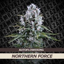 Northern Force Auto
