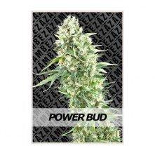 Power Bud