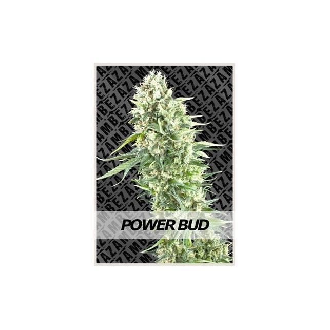 Rude Bud Auto