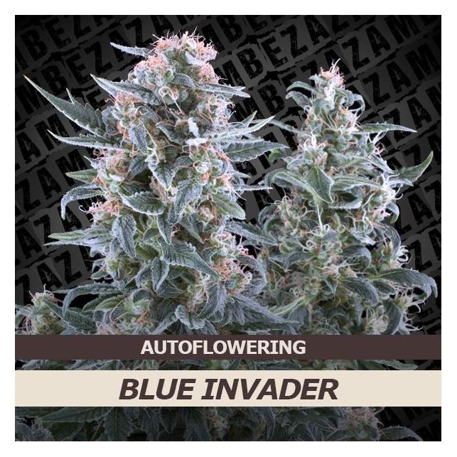 Blue Invader Auto