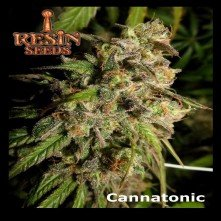 Cannatonic Regular