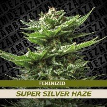 Super Silver Haze Zambeza Seeds