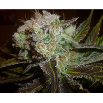 Prozack (Medicinal) 1