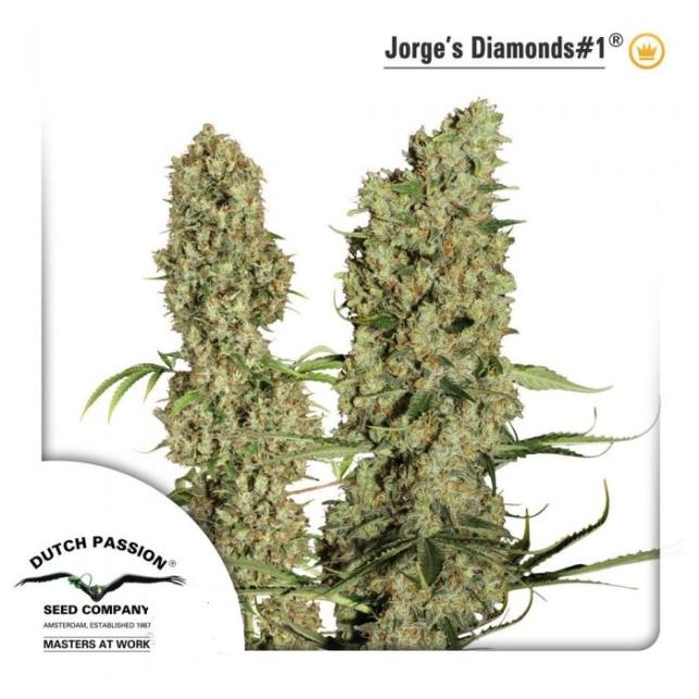 Jorge Diamonds