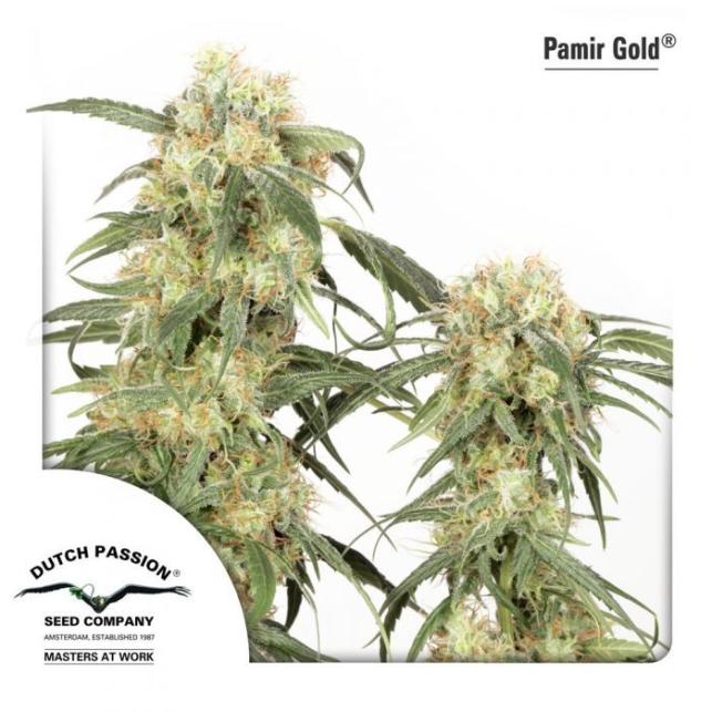 Pamir Gold 1