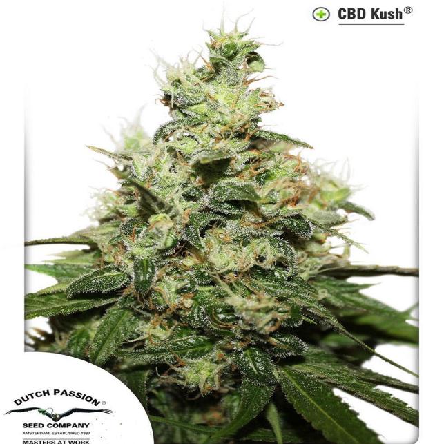 CBD Kush 3