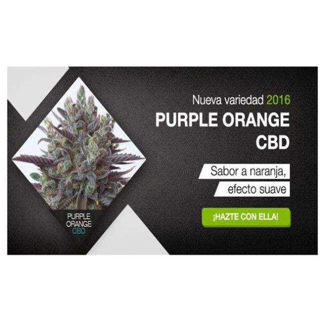 Purple Orange CBD 1