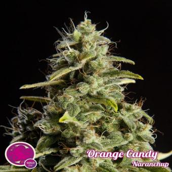 Orange Candy 1