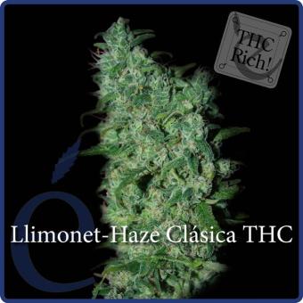 Llimonet Haze Clásica THC