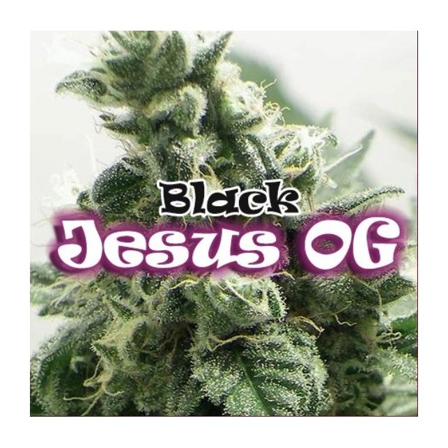 Black Jesus OG