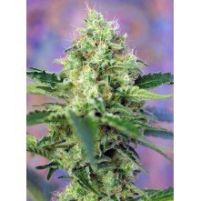 Crystal Candy Auto