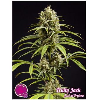 Fruity Jack / Jack el Frutero