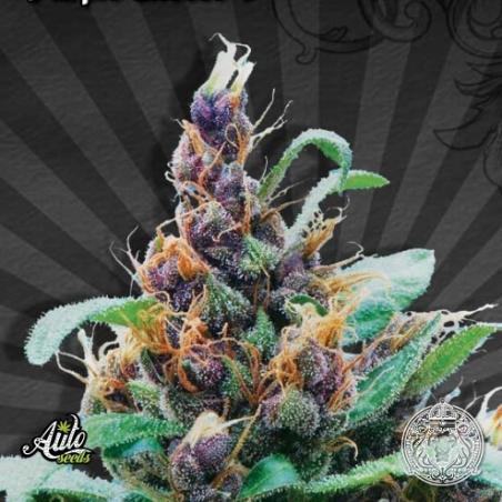 Purple Stilton