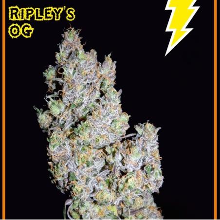 Ripley's OG