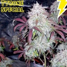 Tyrone Special