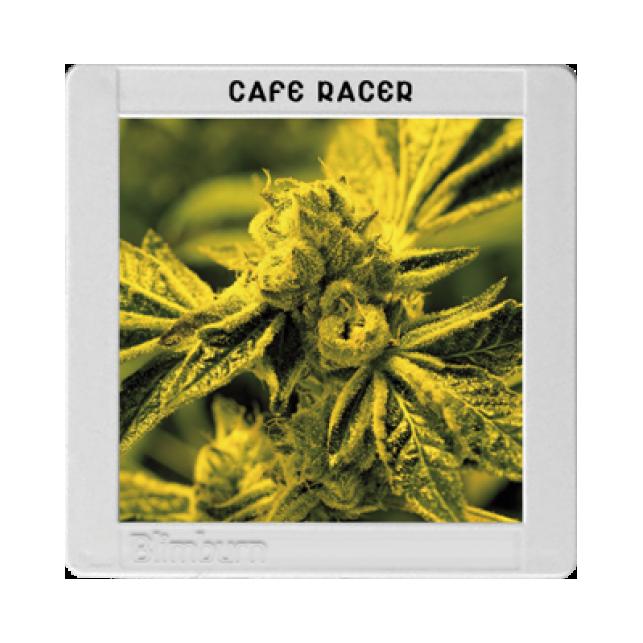 Café Racer