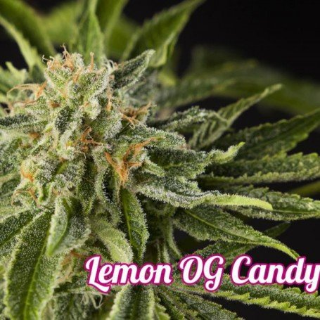 Lemon OG Candy