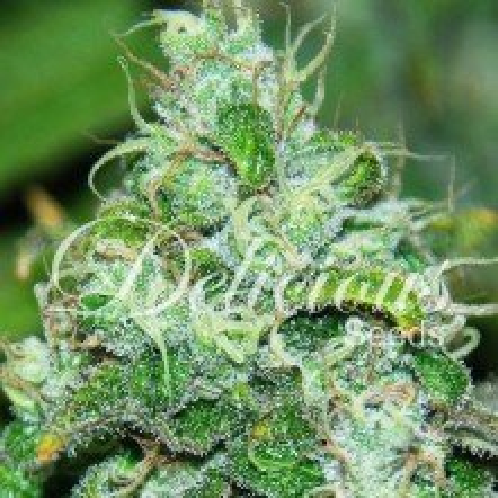 Fruity Chronic Juice (Medicinal)