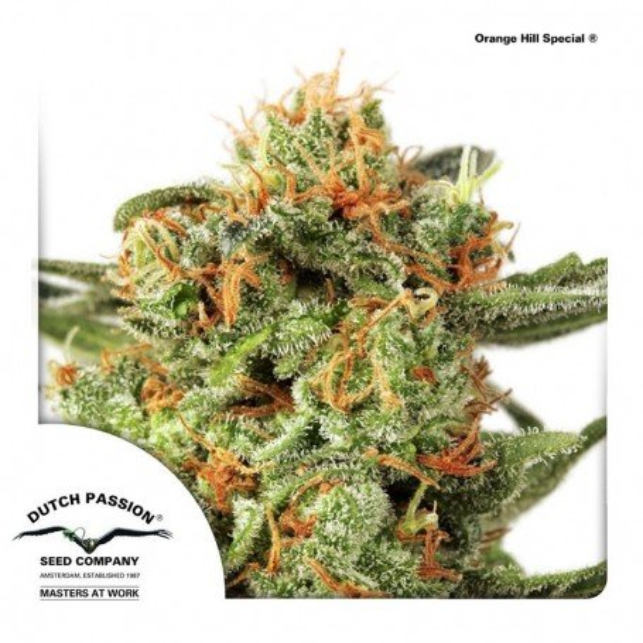 Orange Hill Special 3