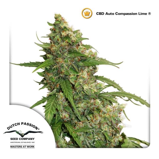 CBD Auto Compassion Lime