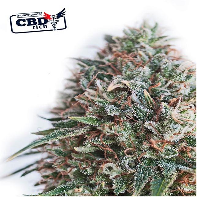CBD + Critical 47 - Positronics