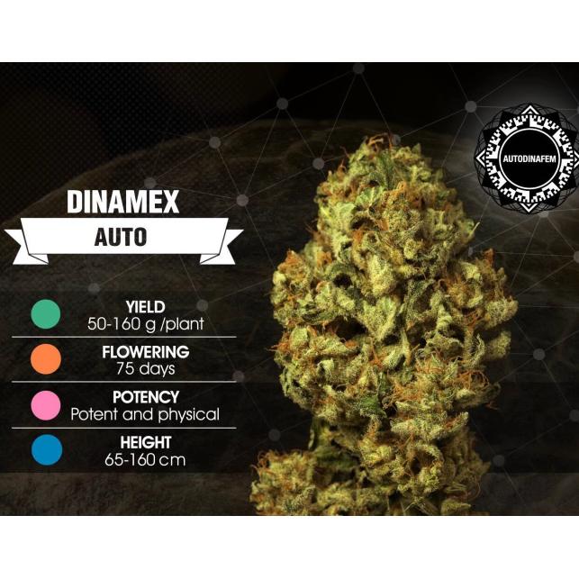 Dinamex Auto - Dinafem Seeds