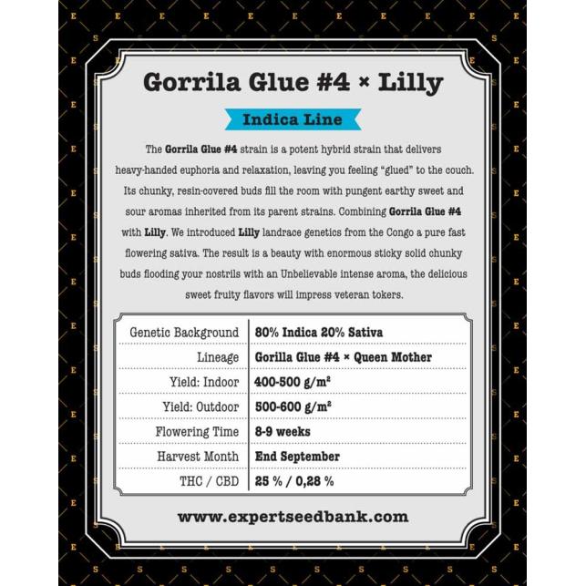Gorilla Glue 4 X Lilly