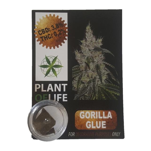 CBD SOLID - Gorilla Glue