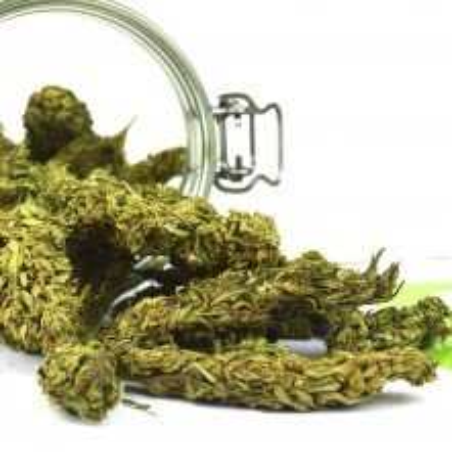 Arae Hempbud Premium Selection (Herbes sans THC)