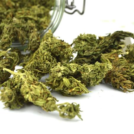 Hempbud Premium Selection (Legal marijuana)