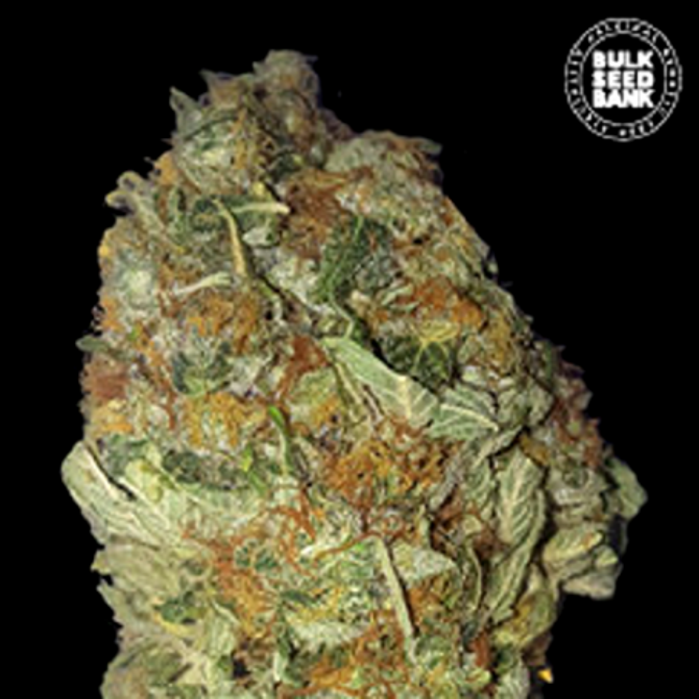Green Candy - Bulk Seed Bank