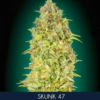 Skunk 47
